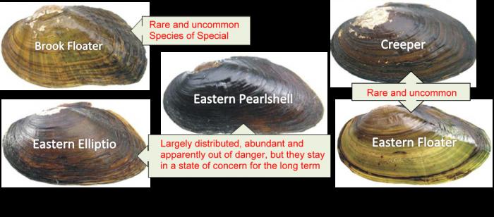 Species moule