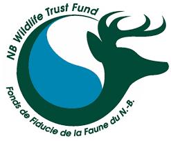 logo NBWTF