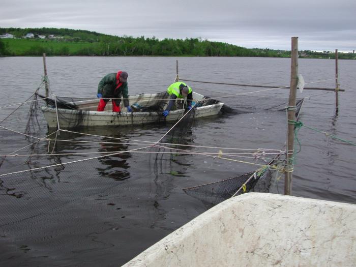 Prise secondaire des pêches commerciales